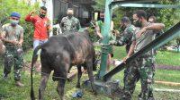 Dalam rangka menyambut Hari Raya Idul Fitri 1442 Hijriah, Korem 023/KS memotong dua ekor sapi untuk dibagikan kepada Prajurit dan PNS, Selasa (11/5/2021).