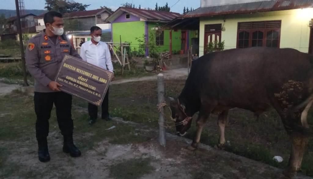 Kapolres Taput AKBP Muhammad Saleh Menyerahkan Hewan Sapi Kurban dari Kapolda Sumut Irjen Pol Panca Putra Simanjuntak kepada Panita Hewan Kurban Tarutung. (Foto: dok/istimewa)