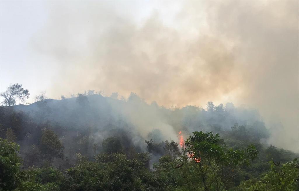 Perbukitan Aek Garut di Kecamatan Sibolga Utara Terbakar. (Istimewa)